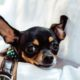 Pet Friendly Halfway Houses Delray Beach
